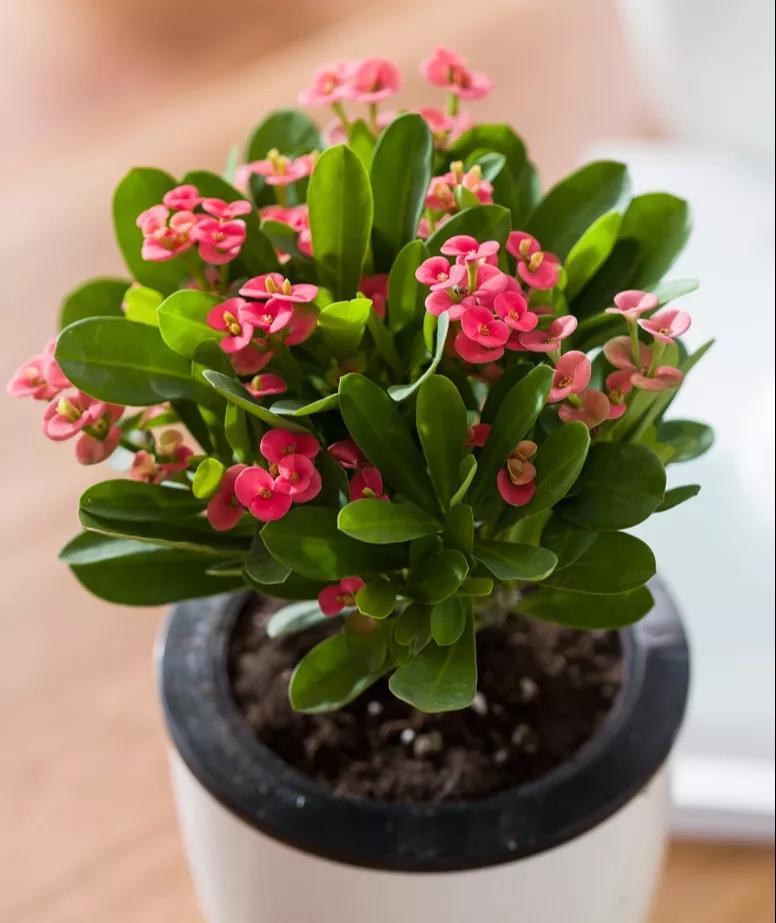 冬季花期超长的观赏花卉推荐