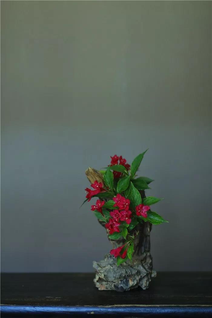 丝瓜、虫巢、树桩……你想不到的器皿插花,野趣盎然!