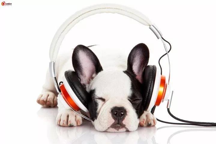 我们为什么要多听音乐?