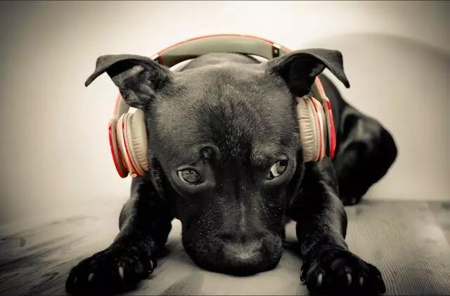 通过听声音就可以辨别音质好坏,你到了吗?