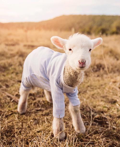 【羊奶粉喂养知识】宝宝喂奶间隔时间一般是多久?