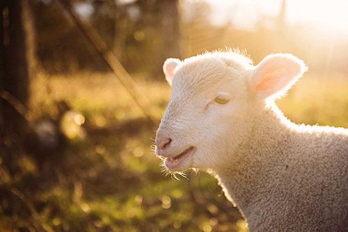 """羊奶粉为什么""""贵""""?这些原因你真的知道吗?"""