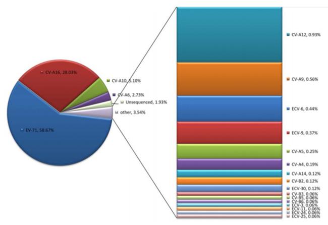 腸道病毒核酸檢測系列產品(熒光PCR法)