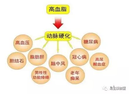高血脂如何调养?