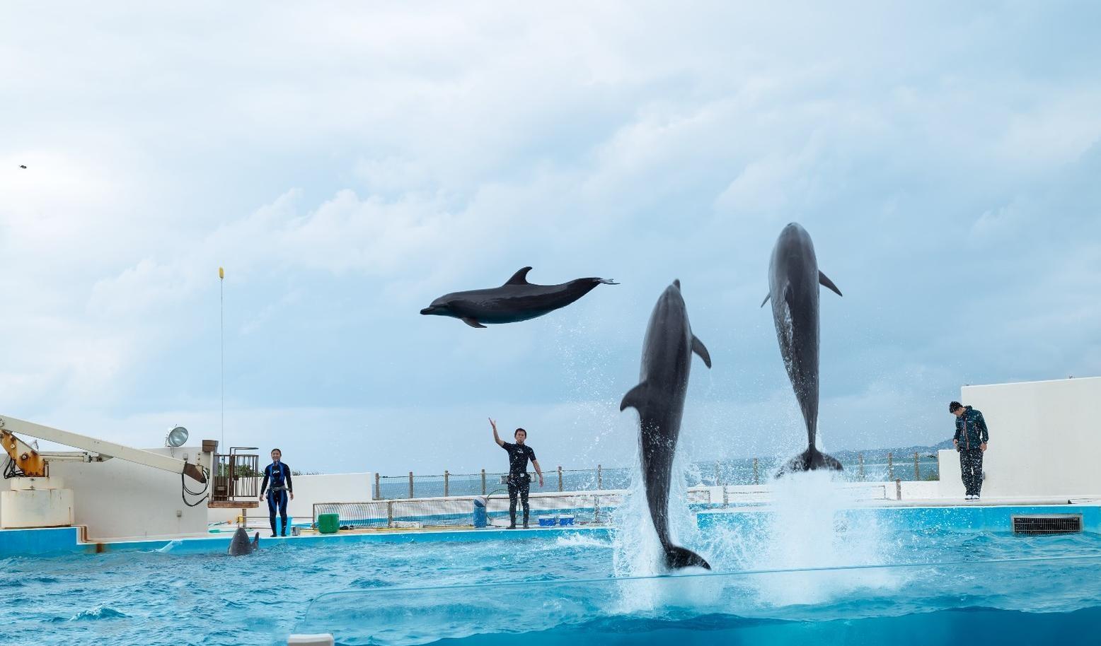 香港海洋公园:业绩连续第4年亏损,仍会策划新项目!