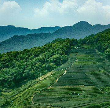 宁波唯奇茶业有限公司