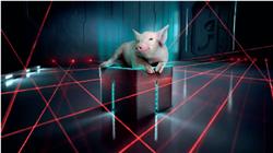 正邦科技 靠卖猪料就能让股价上天?