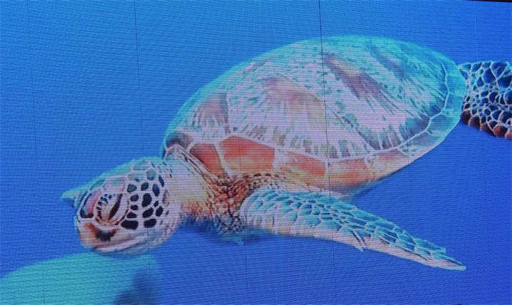 惠州市博罗龙山学校会议室LED室内全彩屏专用P2.0表贴单元板(奥马哈)