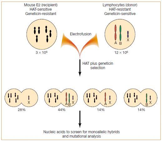 林奇经典再现  遗传性儿童脑肿瘤家系研究重要发现