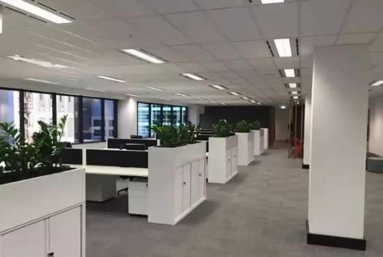 办公植物租赁的5大趋势