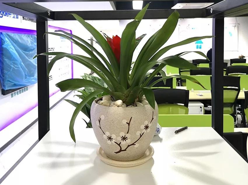 植物租赁方案一