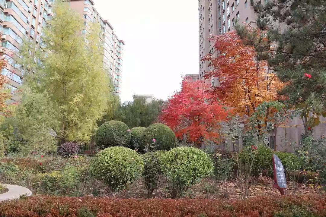 开展冬季绿化养护