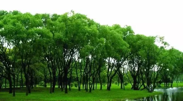 园林树木养护的质量标准