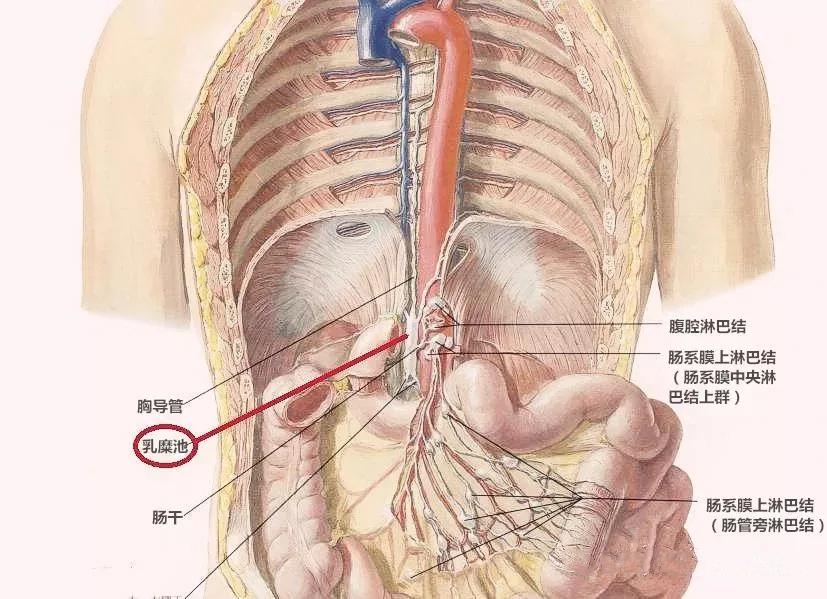 【腹腔镜篇】小肠手术