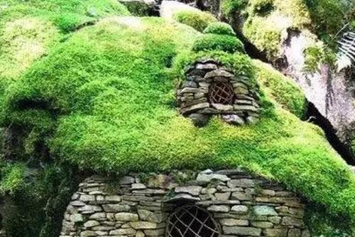 小区物业绿化养护管理