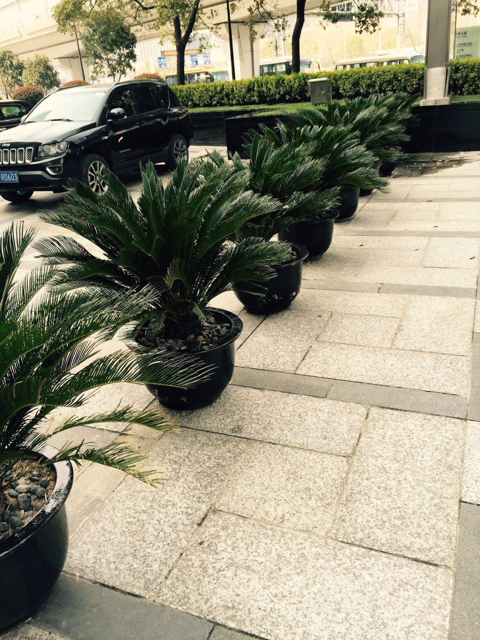 会场植物租赁方案