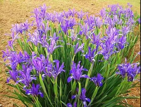 又是一年春来到,60种庭院植物分享给你