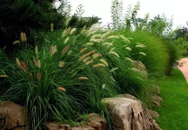 又是一年春来到,60种花卉植物(三)