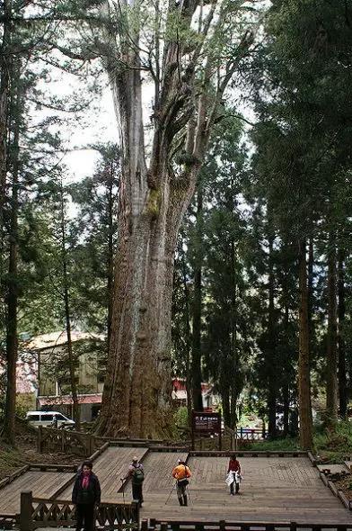 【英菲尔整木定制】地球上十大老树王盘点,最大树龄超8万年!