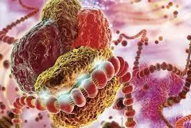 企讯 | 圣诺制药公布STP705治疗皮肤原位鳞状细胞癌临床二期试验中期分析报告的顶线阳性数据