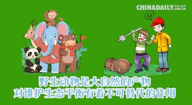 MG动画制作公益宣传动画,保护地球人人有责