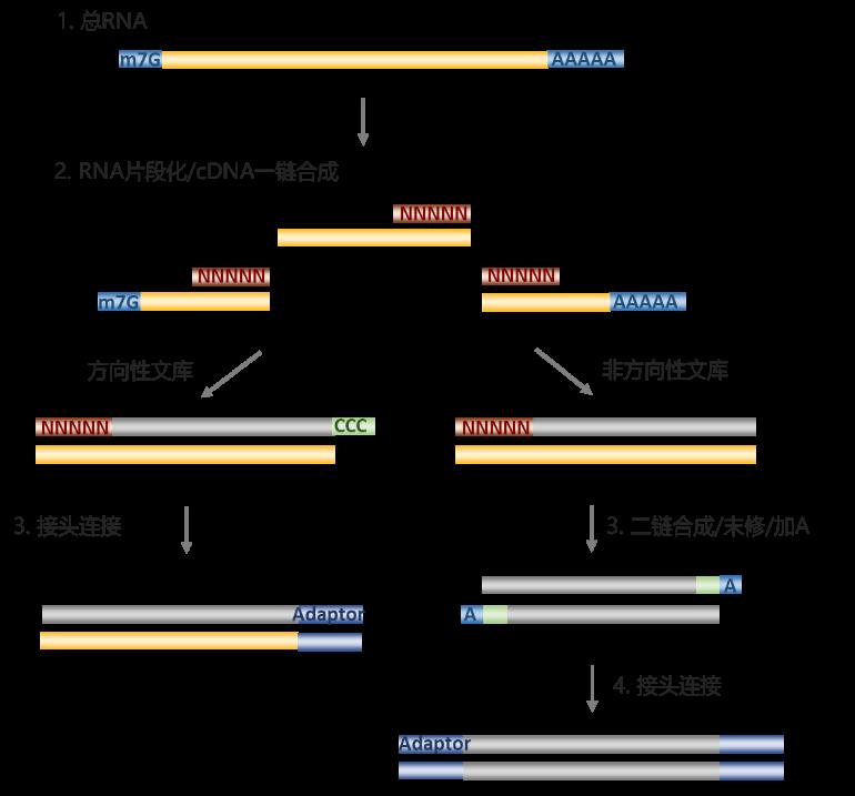 GenoCare RNA文库构建试剂盒