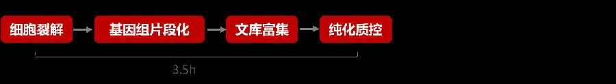GenoCare单细胞文库构建试剂盒