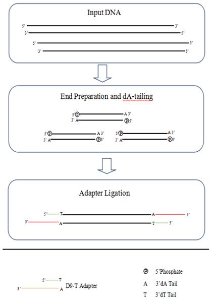 GenoCare gDNAcfDNA文库构建试剂盒