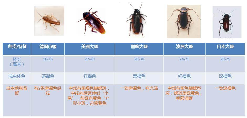 蟑螂的危害及防治方法