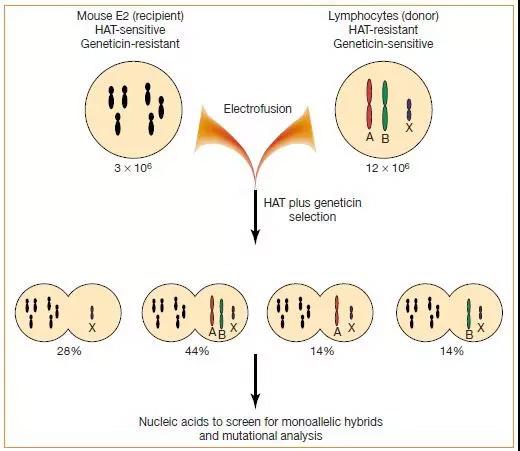 全新遗传性肿瘤致病基因突变被发现