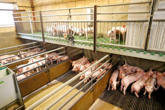 Farm Visit: Next generation pig farmer preparing for the future