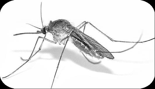 登革热蚊密度监测