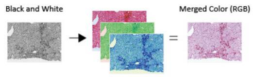 亮场显微镜光源B-Series