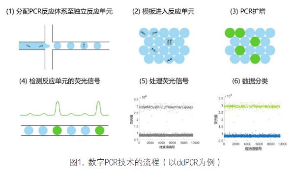 数字PCR技术在肿瘤标志物检测中的临床应用价值,临床实验室,2020