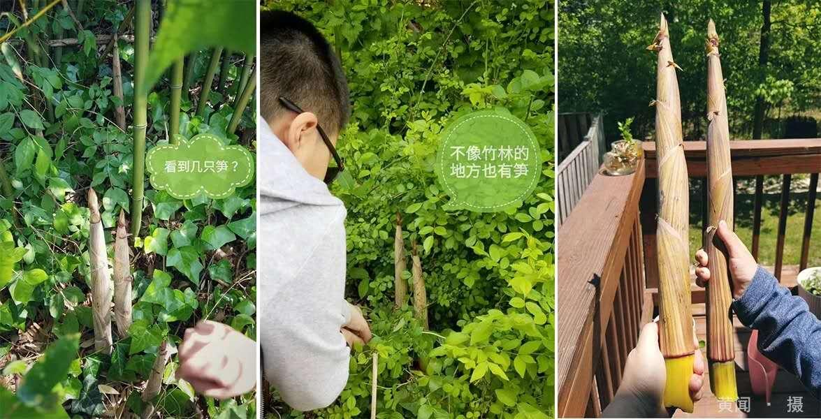 疫情下对话美国景观建筑师 | 俞昌斌&黄闻的问与答