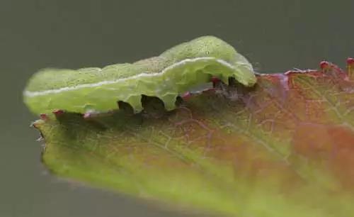 六月养管要点及常见病虫害防治技术