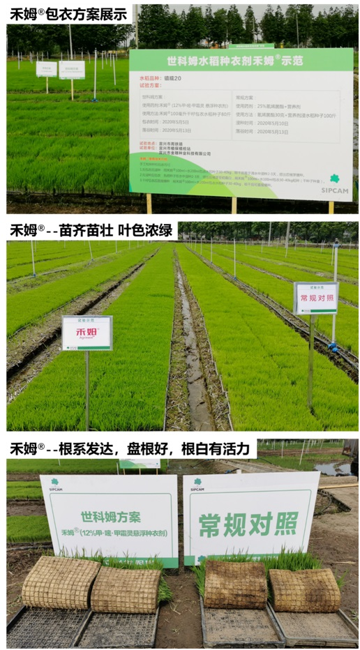 水稻包衣用禾姆®  促根壮苗保丰收