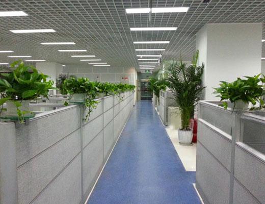 绿植租赁 让你拥有更多的绿色空间