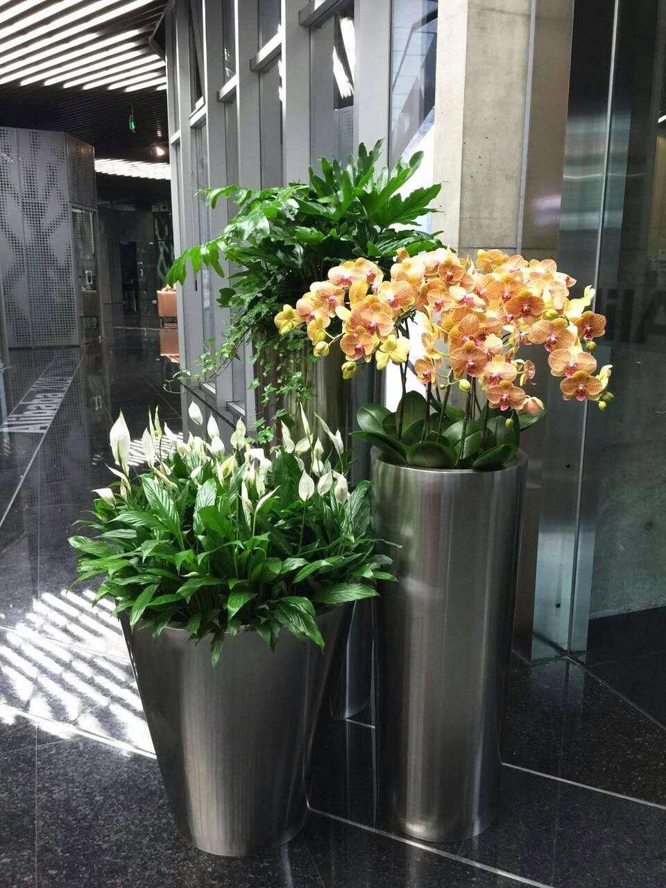 植物租赁优势