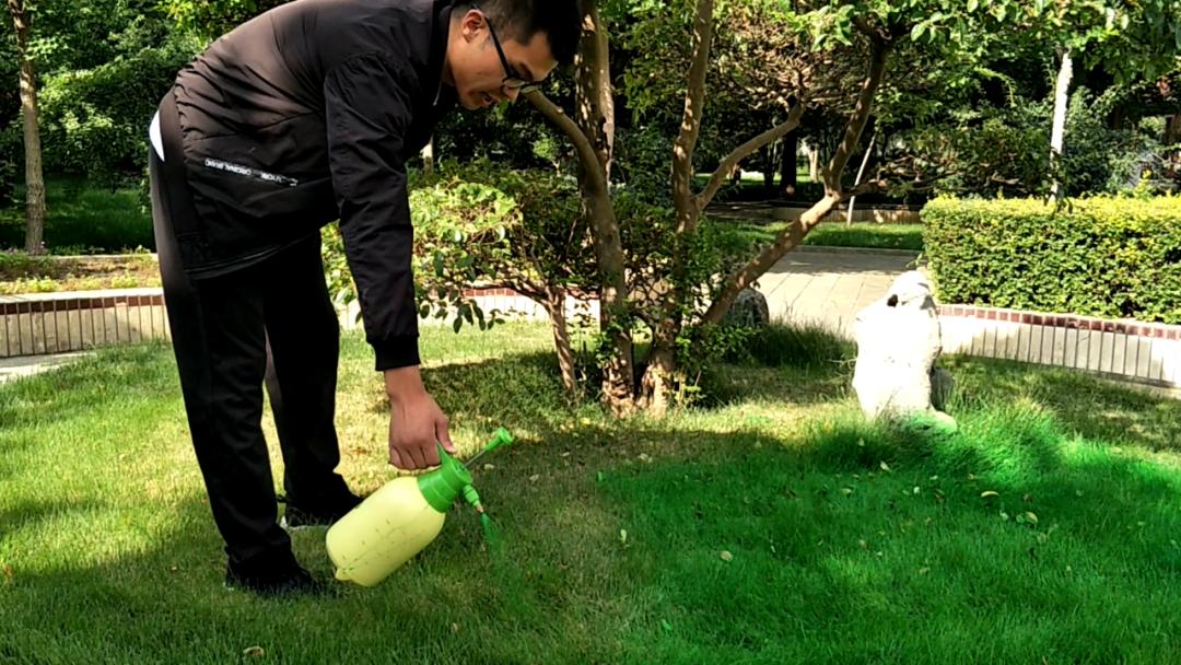 用最少的钱达到良好的治疗效果,草坪病害对症治疗有妙招儿