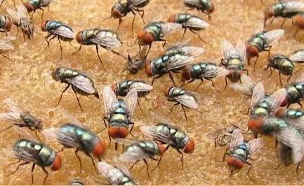 粪便处理灭蝇剂