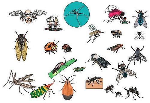 植物液灭蚊蝇剂