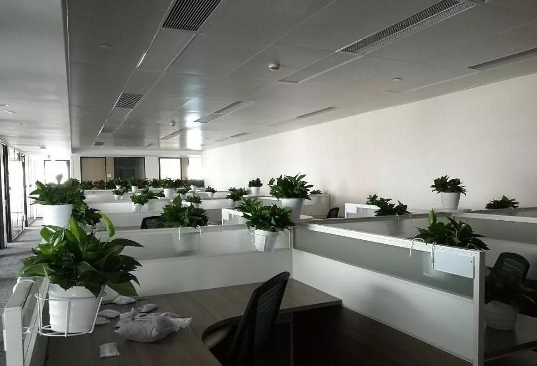 上海某公司3000平方植物租赁摆放案例