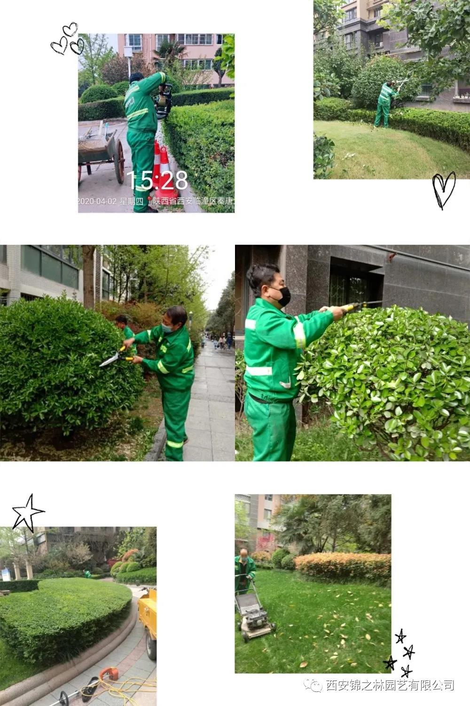 绿化养护修剪标准及注意事项