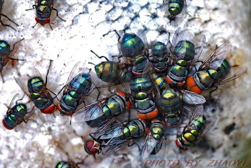 苍蝇的防治用灭蝇剂
