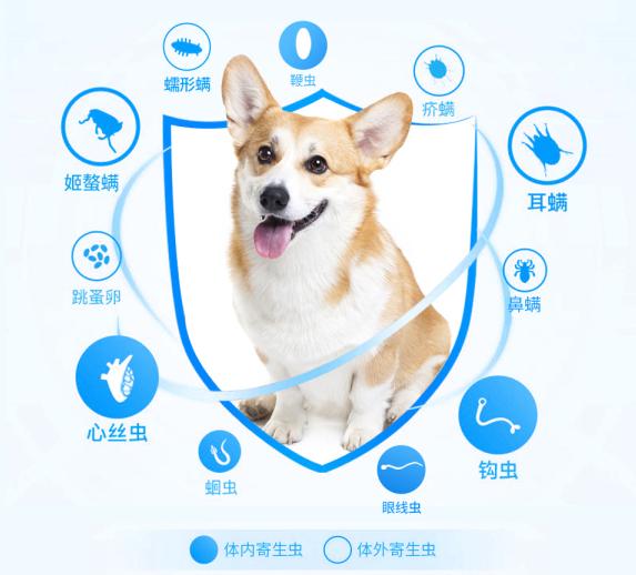 狗狗拉稀是什么原因?——欢迎在线咨询