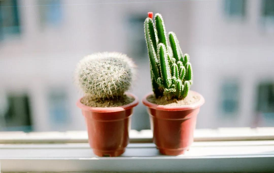 办公室绿植如何选择,亲尚植物租赁来教你!