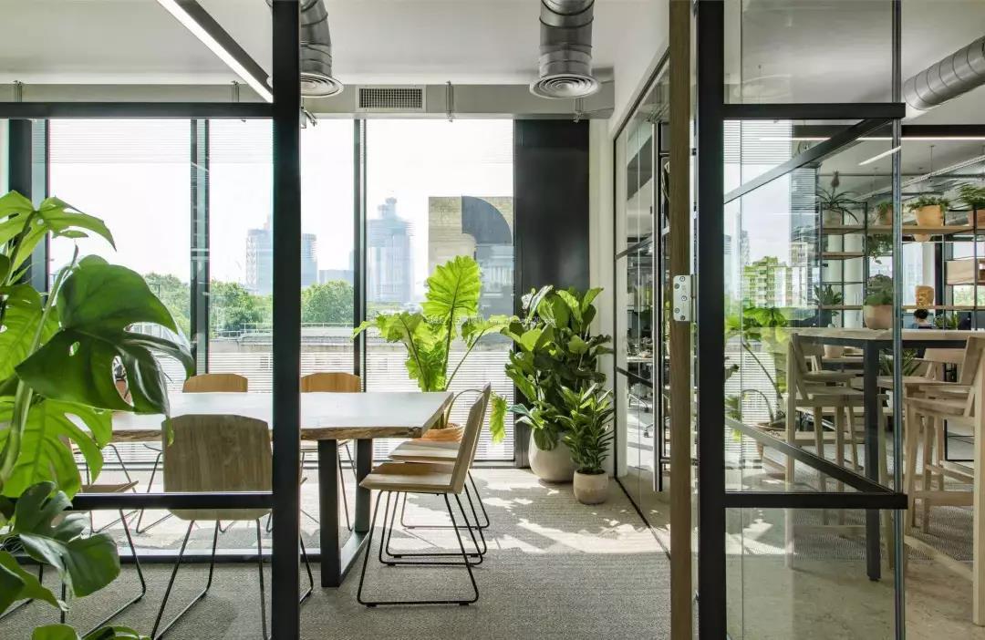 植物租赁-上海亲尚绿化工程有限公司