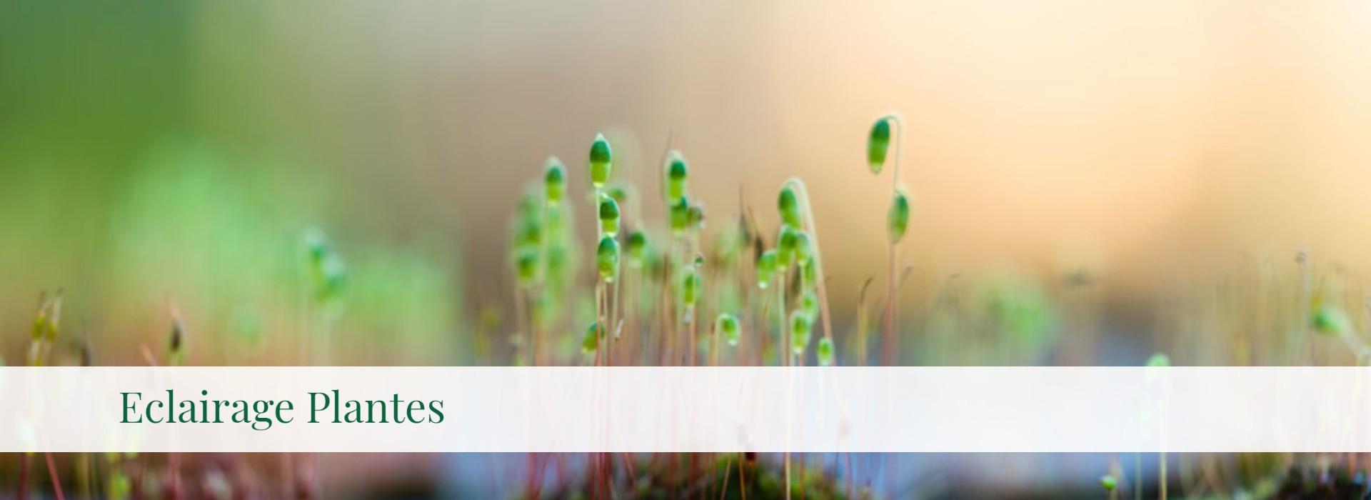 Eclairage Plantes
