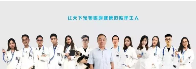 有没有在线宠物医生之类的服务?